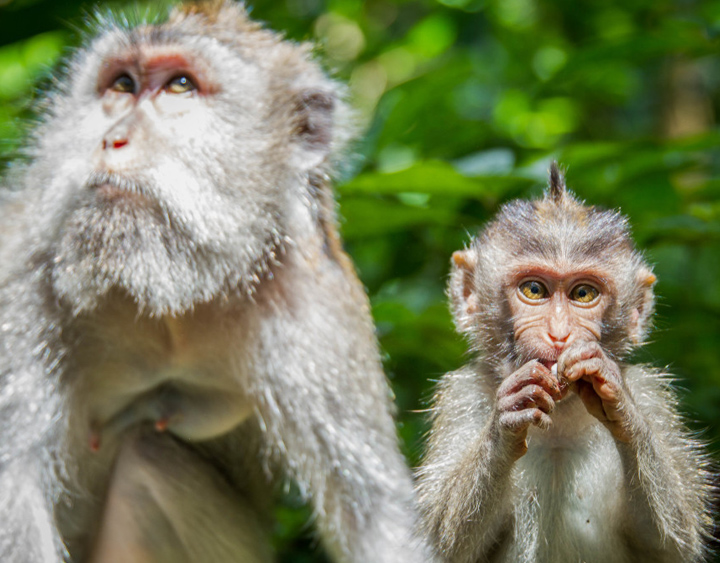 Monkey Forest Tours