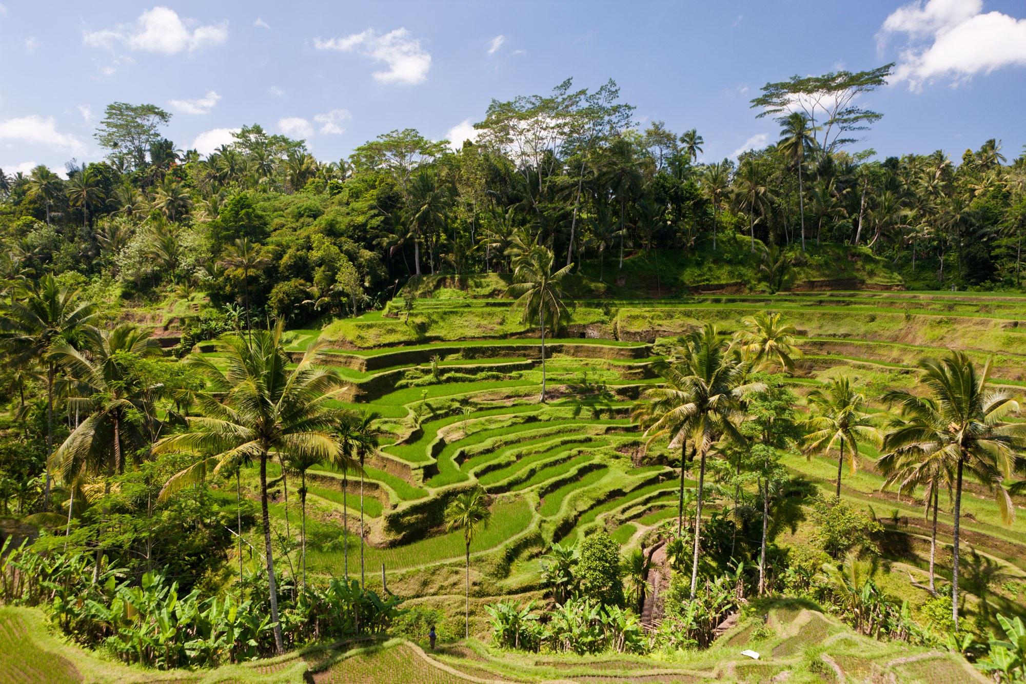 Ubud Village Art Crafts Tour